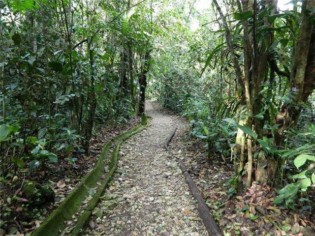 Costa Rica. Центральная Америка. - Страница 17 Ce2a2dc9545e