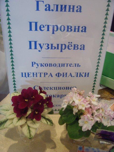 """""""Фиалки. Новая волна"""". Январская выставка. 7e7b56651c35"""