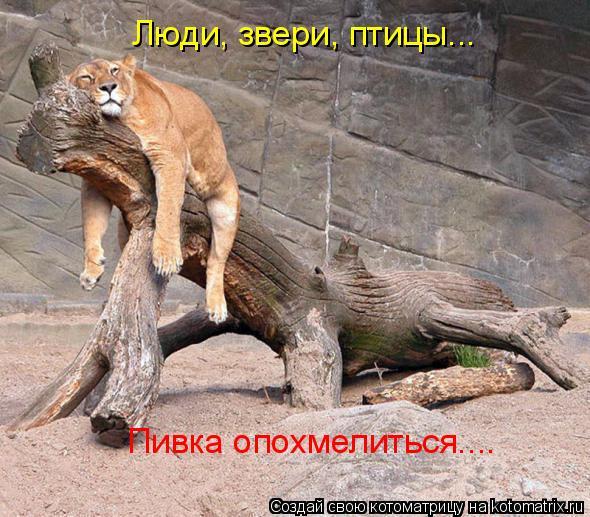 Забавные животные - Страница 4 7ea03dc530b9