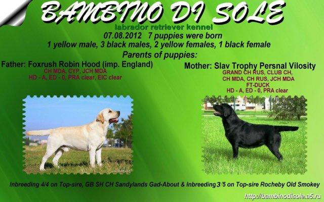 Счастливая солнечная семерочка от Bambino Di Sole 562d28861399