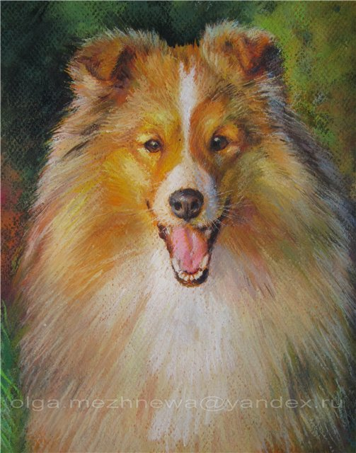 Рисую собак по фото - Страница 6 B1de5dc9ac56