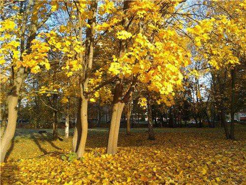 Осень, осень ... как ты хороша...( наше фотонастроение) - Страница 7 3822a933728a