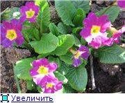 Сад моей Свекрови 3bc0fd1adfd8t