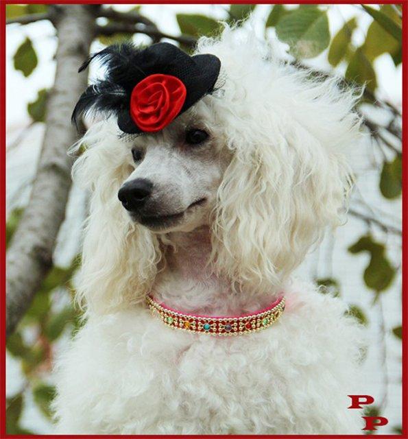 "Питомник ""Прима Персона"". Мои собаки-моя жизнь! 2940e67882e5"