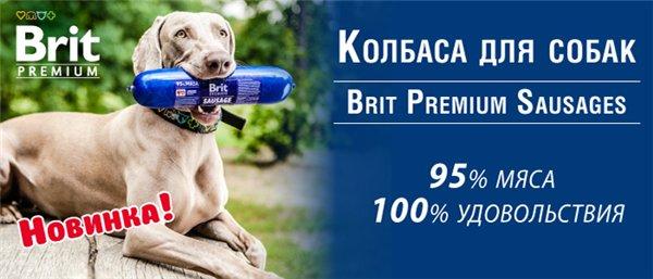 Интернет-магазин Red Dog- только качественные товары для собак! - Страница 4 5fbd21217cae