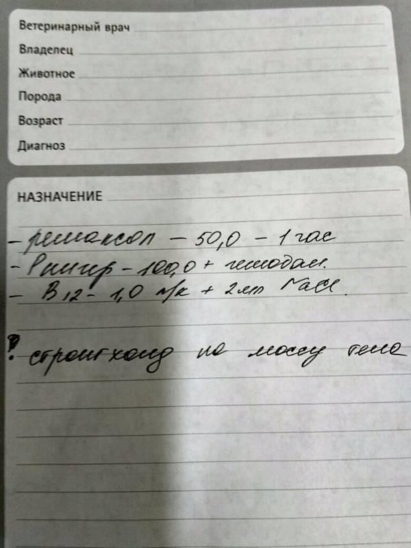 Москва, Норис, кобель 23.09.2004 65f7c2922cb8