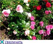 Specially for Karkela )))    Тестирование сербок и проч. - Страница 4 01844f9cb329t