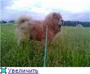 Моя собачка 00fe9ca4978et
