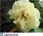 Колорлайн, розы 2013. 986327735883t