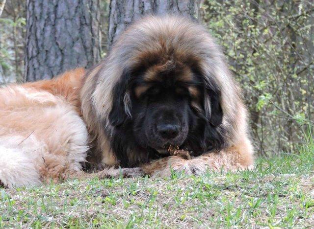 Наши собаки, друзья и гости, кот Мензурка - Страница 30 971da67dd18e