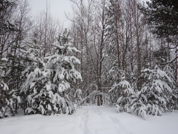 Зимняя сказка на наших фотографиях - Страница 14 A89b78208304