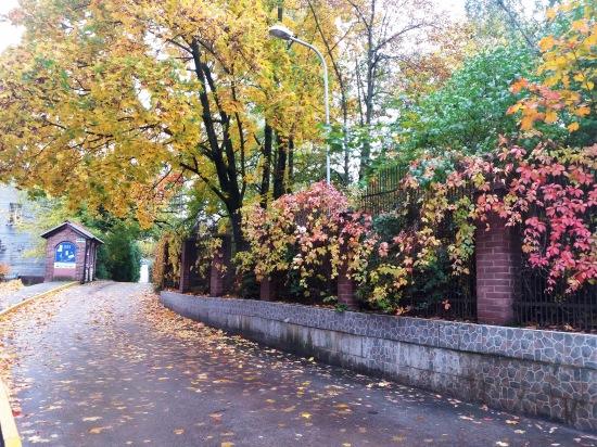 Осень, осень ... как ты хороша...( наше фотонастроение) - Страница 8 4a47371b13f0