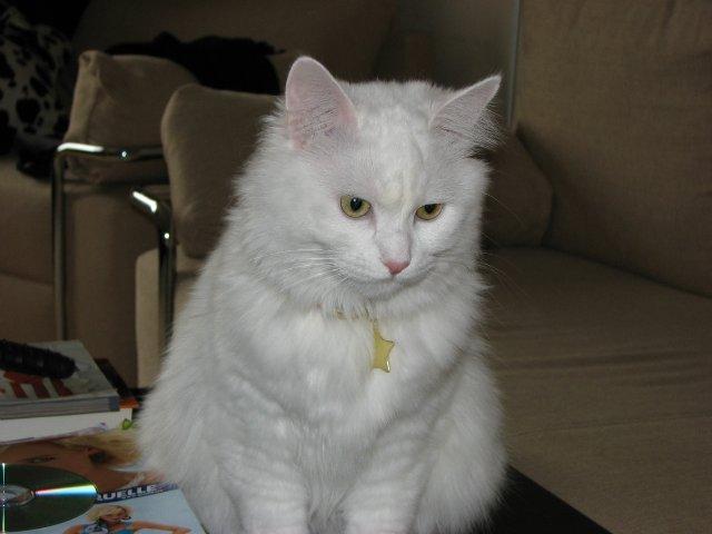 Коты, кошки, котята и все что с ними связано 60e92f0941ea