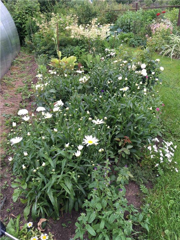 И мои хвастушки-цветушки! - Страница 37 Cdf488d87e7a