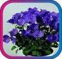 продам семена экзотических растений - Страница 3 E8a5ac2cc7c8