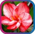 продам семена экзотических растений - Страница 3 F18ac01d7b4f
