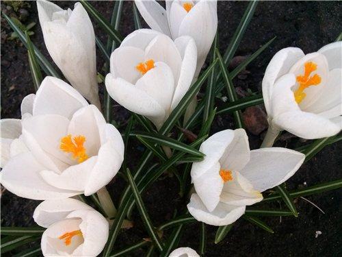 И у цветов весна)) 6ca84e54ff49