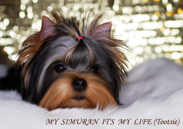 My Simuran It's My Life (Тутси)  A395bdfd98e2