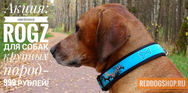 Интернет-магазин Red Dog- только качественные товары для собак! - Страница 3 F9c7dd175fa4