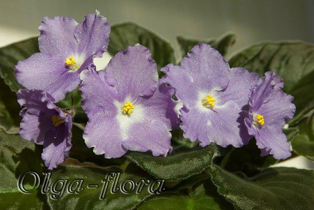 Lyon's Lavender Magic (LLG/Sorano)  Dba30b5b4267
