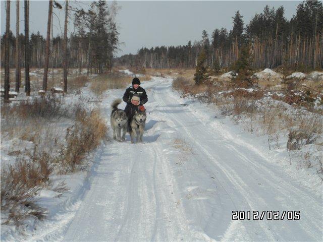 Аляскинские маламуты в Чите - Страница 2 Ab920ea4cdef