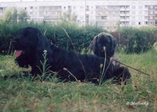Собаки Татьяны Моисеенковой, кот Мензурка 6f8a294c72b4