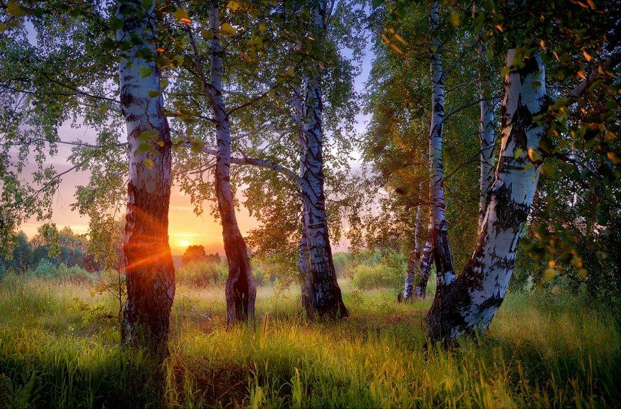 Отцвели цветы, падают листья, птицы молчат, лес пустеет и затихает.ОСЕНЬ. - Страница 2 848637c066af