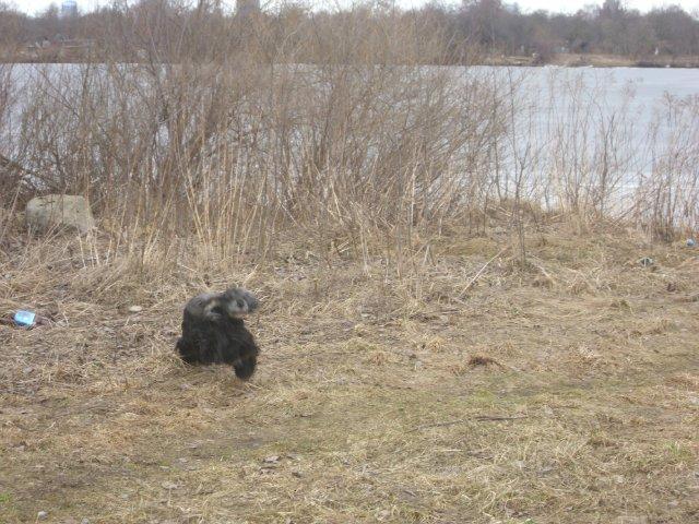 Собаки Татьяны Моисеенковой, кот Мензурка - Страница 3 853287a40719