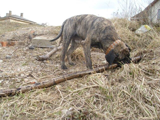 Собаки Татьяны Моисеенковой, кот Мензурка - Страница 3 679a457c6939