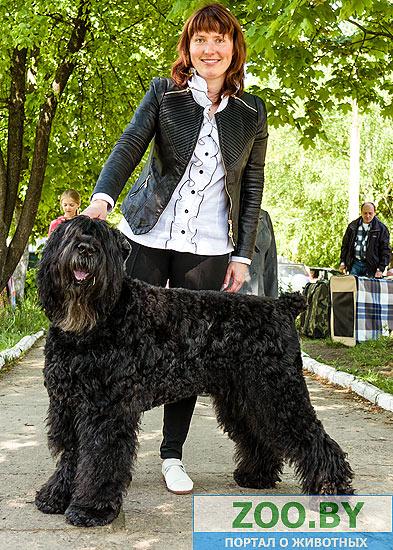 19 мая, Молодечно, Республиканская выставка собак всех пород 0bda690cce9e