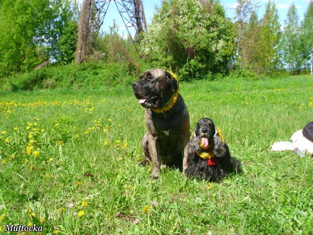 Собаки Татьяны Моисеенковой, кот Мензурка - Страница 4 Aa270e781d62