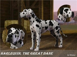 Собаки - Страница 5 Cdff28767b5e