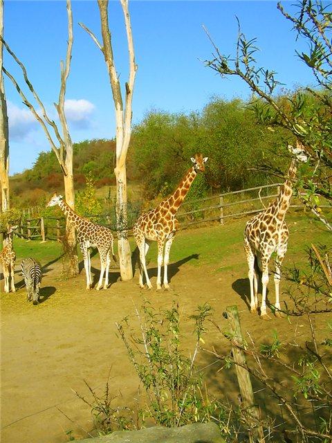 Разные зоопарки 4324b8445a9f