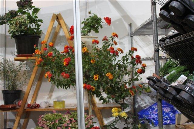 XIX Международная выставка Ландшафт и Приусадебное хозяйство-2012 6b889692c25d