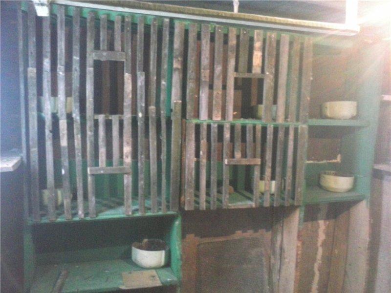 Голуби Жека07 (Пчелино) - Страница 3 B5ad905e3255