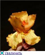 Совместное творение цветов из лент 6442bdb436eat