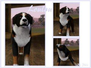 Собаки - Страница 5 49b1641c77b4