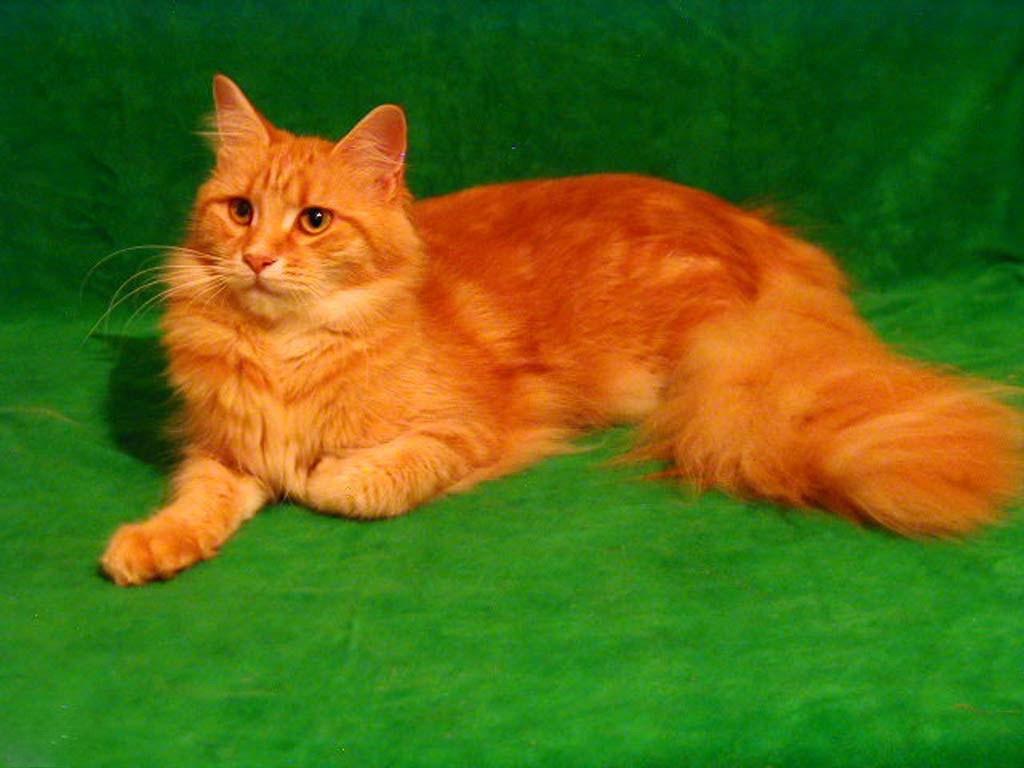Кот в вентиляции (?),Говорова (вызов609) 25934d93950c