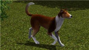 Собаки - Страница 4 9b33e27e884b