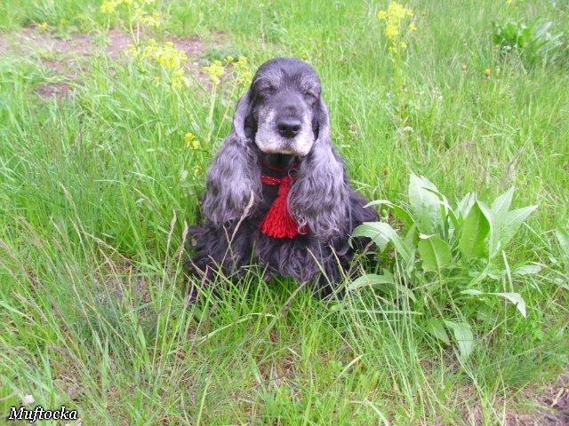 Собаки Татьяны Моисеенковой, кот Мензурка - Страница 4 3bc464c67f97
