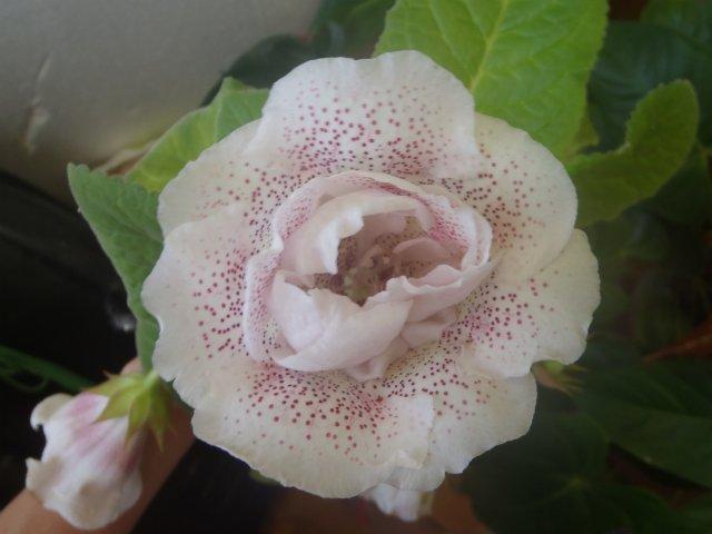 Милые Веснушки (Н.Ткаченко)  Ee29e57ea7a2