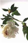 Цветы (flowers) 47e6eeb51c93t