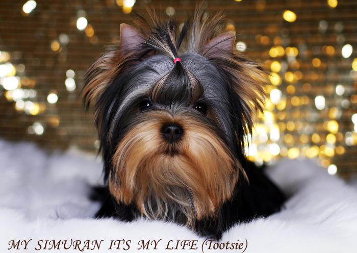 My Simuran It's My Life (Тутси)  Cc1d7c92ae6f