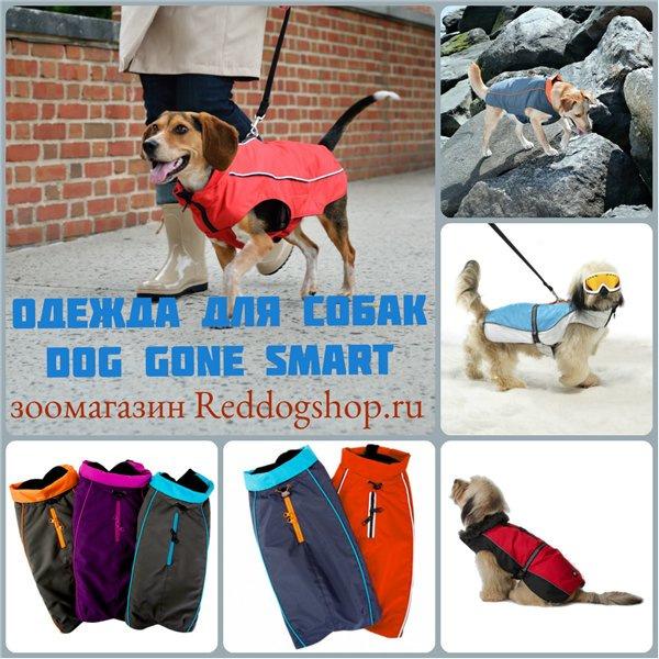 Интернет-зоомагазин Red Dog: только качественные товары для  - Страница 11 A468e293d5fb