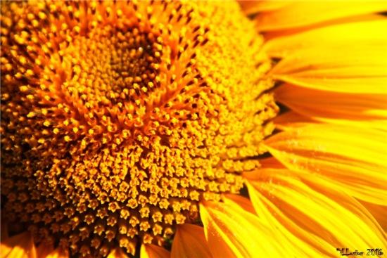 Лето-это маленькая жизнь. Фотоконкурс - Страница 2 984a2840bd7at