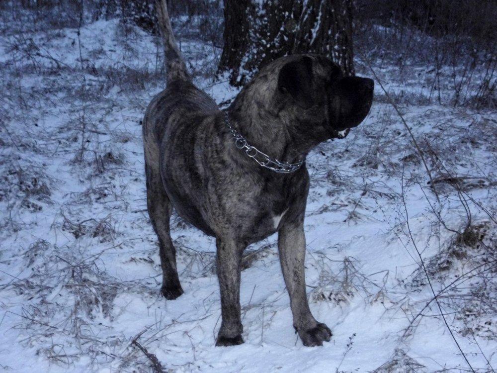 Собаки Татьяны Моисеенковой, кот Мензурка - Страница 3 970f57254dcb