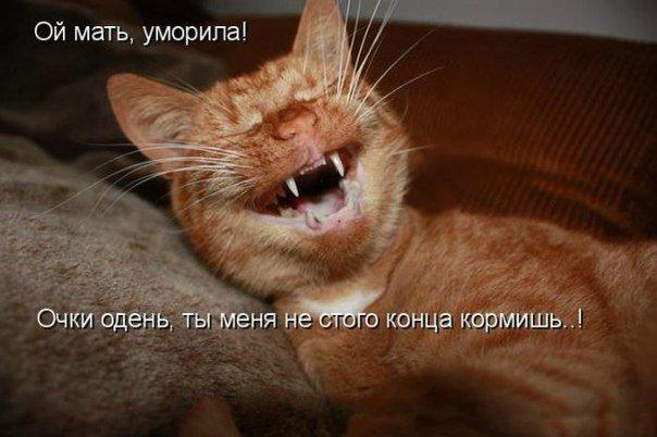 Звери в теме;) Dc34aa26df2d