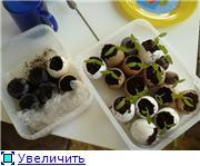Овощи - Страница 5 268dbf4bf11ct