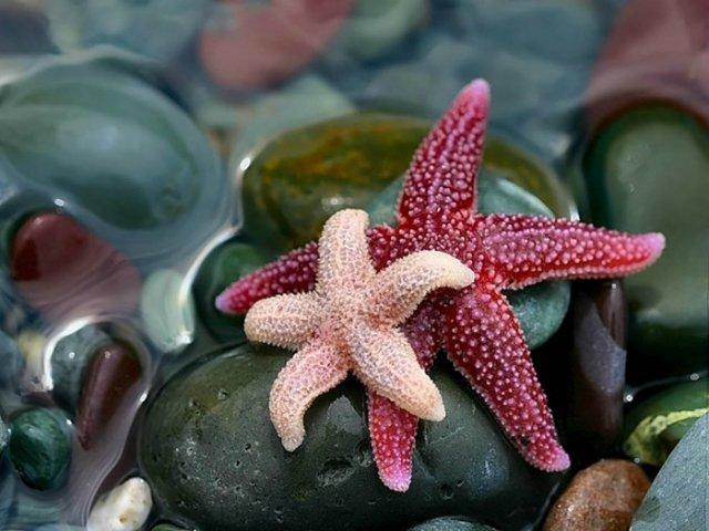 Морская звезда 599eaa3722de