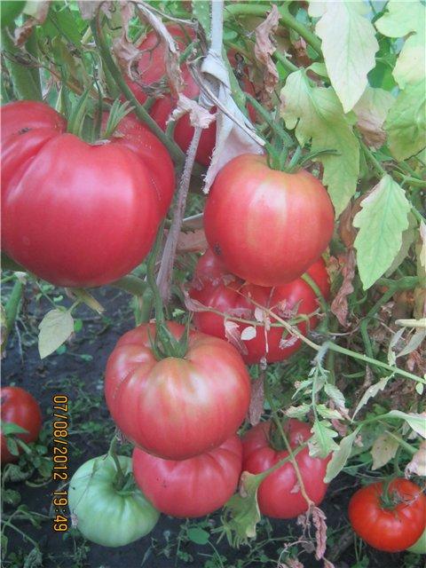 Что растет у нас в саду ? - Страница 18 F418e74fb942